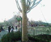 橋のたもとに大木