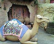 駱駝の帰還