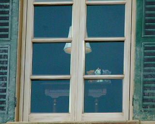 窓際の3匹