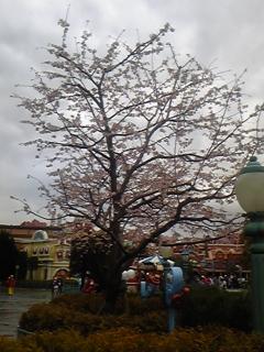 トゥーンタウンの桜