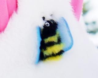 ミツバチ_
