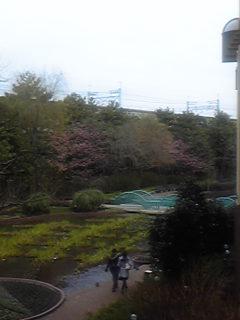 イクスピアリの桜