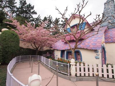 「ミニーの家」の桜