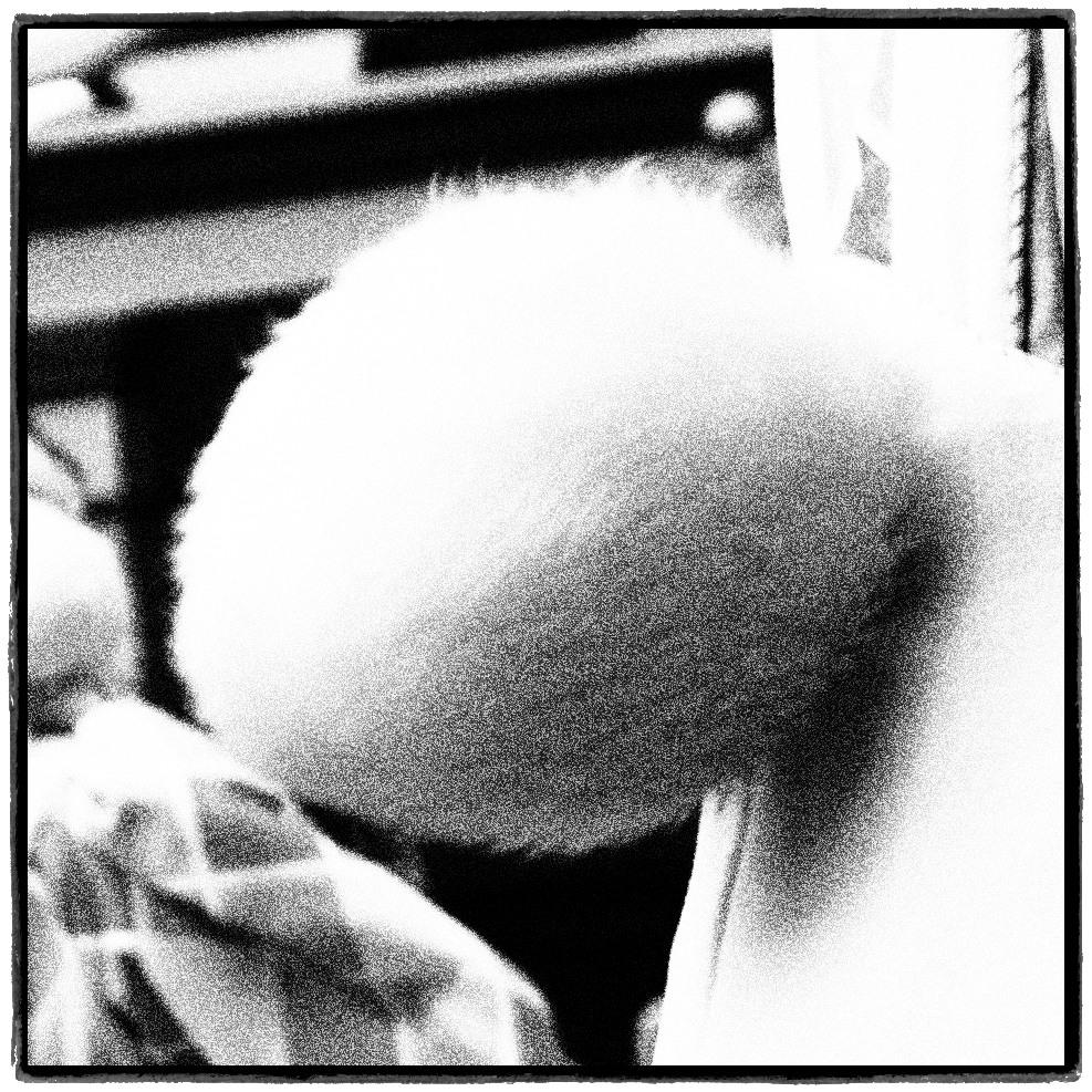 尻尾の研究
