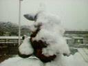 雪まみれのホワイトラビット